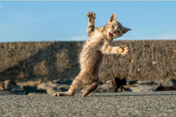 カメラに向かって雄叫び!豊かな表情もネコの魅力の一つ