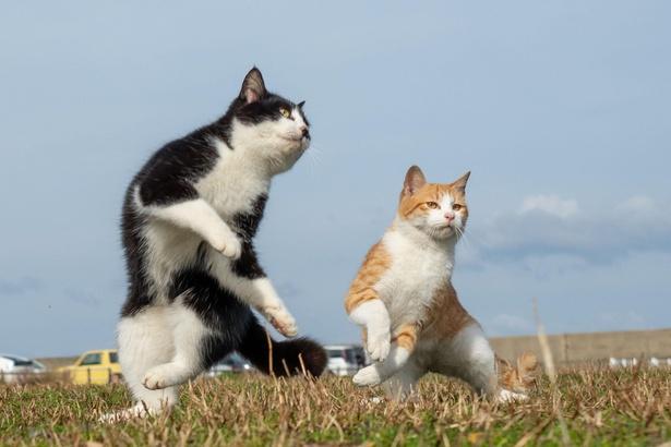 競い合う兄弟ネコ。仲がいい2匹だからこそ撮影できた一枚