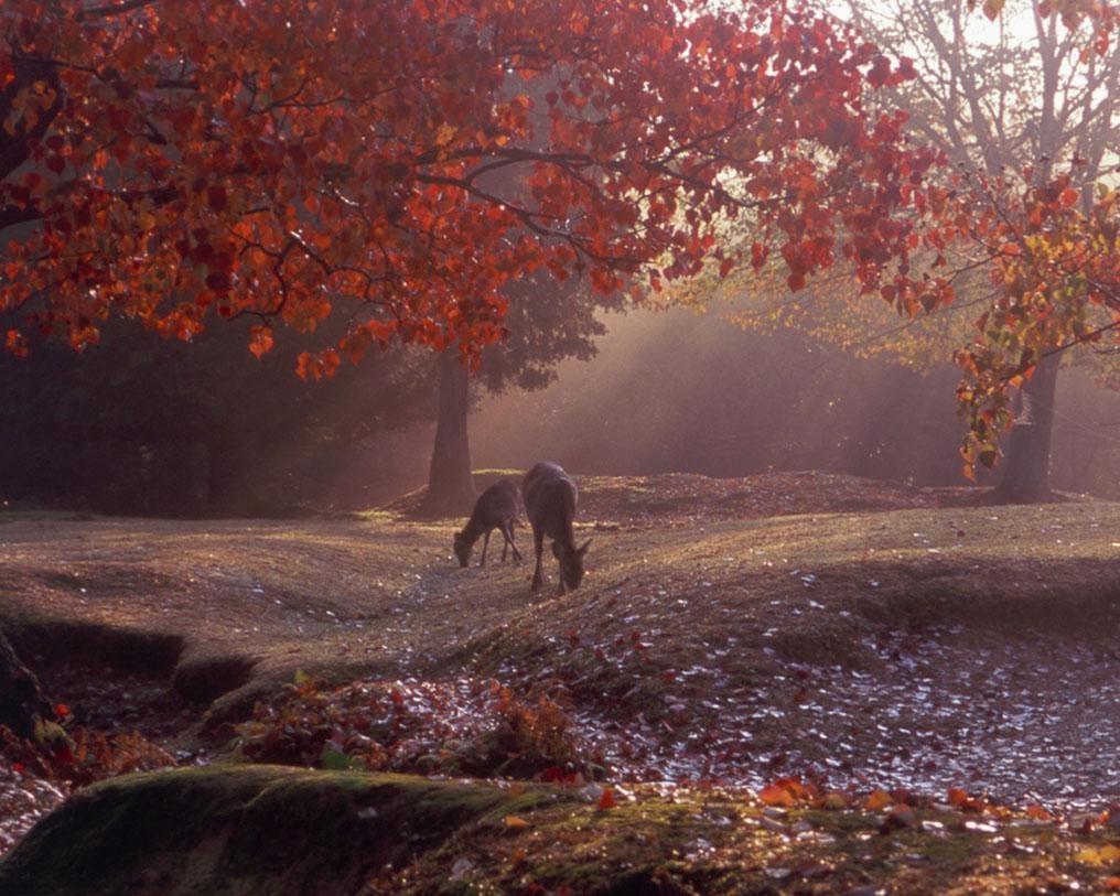奈良公園で紅葉が見頃&「秋夜の奈良旅」開催!美しい紅葉と幻想的な夜景を満喫
