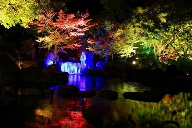 【写真】紅葉で色づいた木々のライトアップはとても幻想的