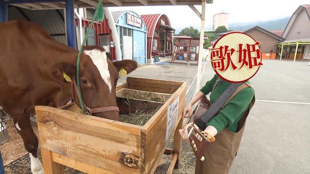 牛を観客にギターを演奏?牧場ロケの運命やいかに