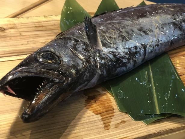 グロテスクな見た目の深海魚。これが驚くほどウマイんです!