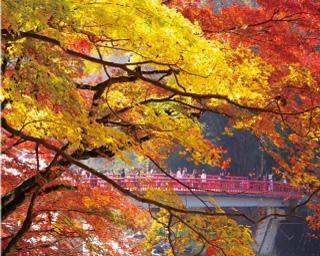 東海随一の紅葉の名所「香嵐渓」を満喫!町歩きや日帰り温泉も楽しむ秋のドライブへ