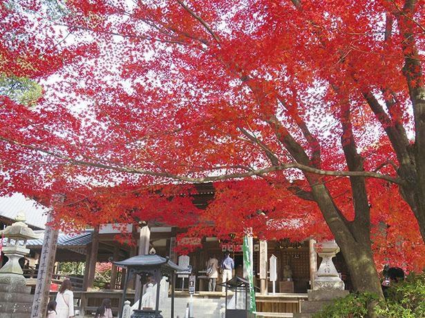 【写真】鮮やかな紅葉と、歴史を感じさせる「本堂」の重厚なたたずまいが美しい