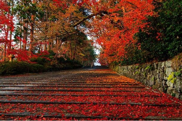「女人坂」の石畳を紅く彩る散り紅葉/光明寺