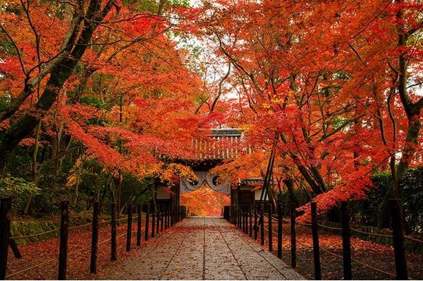 紅葉のトンネルが美しい「もみじ参道」/光明寺
