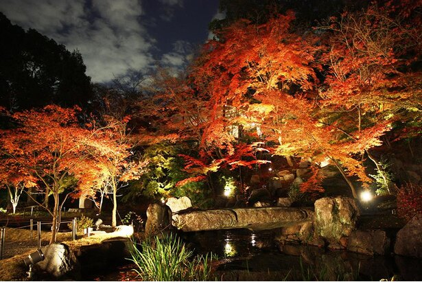 夕方以降は紅葉庭園「錦景苑」がライトアップされ、幻想的な雰囲気に包まれる/長岡天満宮
