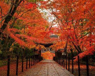 京都・長岡京市で「密」を避けた紅葉巡り!地元の名物グルメも堪能