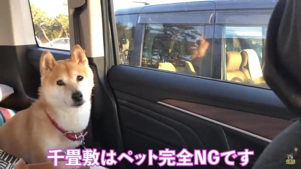 小春ちゃんは「千畳敷」には行けず、車中でお留守番。残念そう