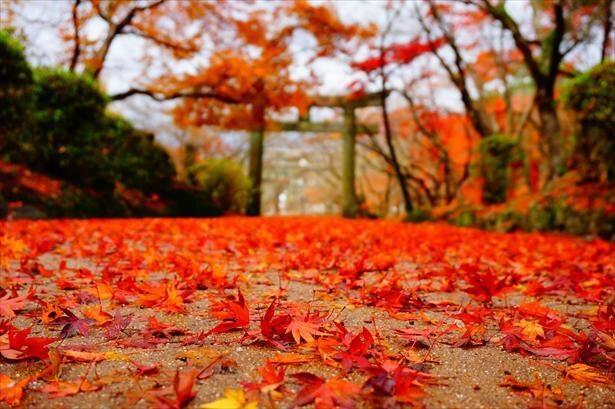 宝満宮 竈門神社は紅葉の名所としても知られる