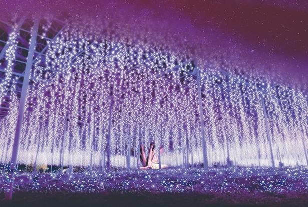 奇蹟の大藤は花びらの細部にまでこだわったイルミネーション