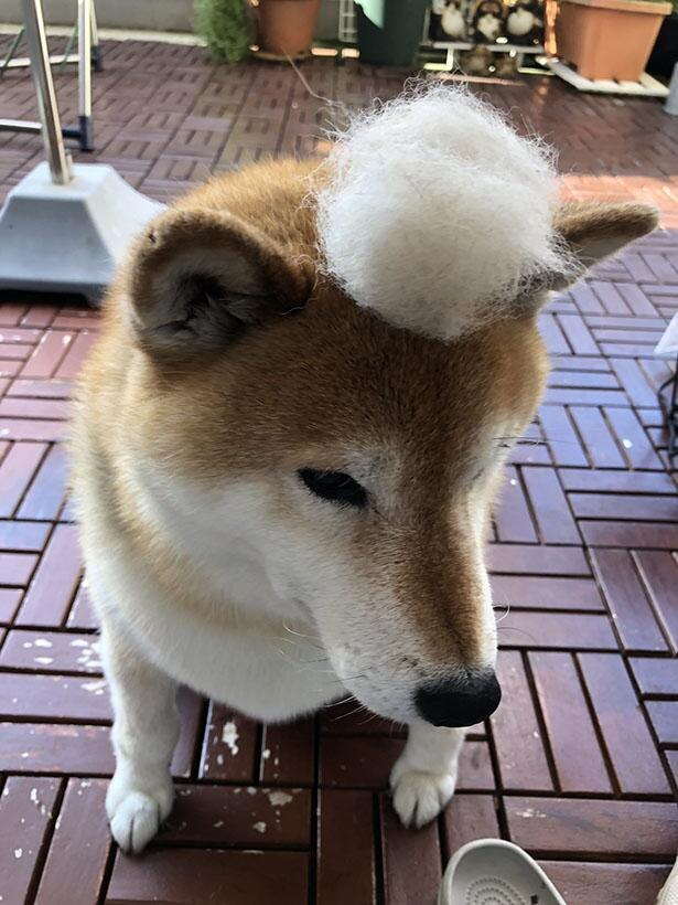 ふわふわの毛玉をトッピング