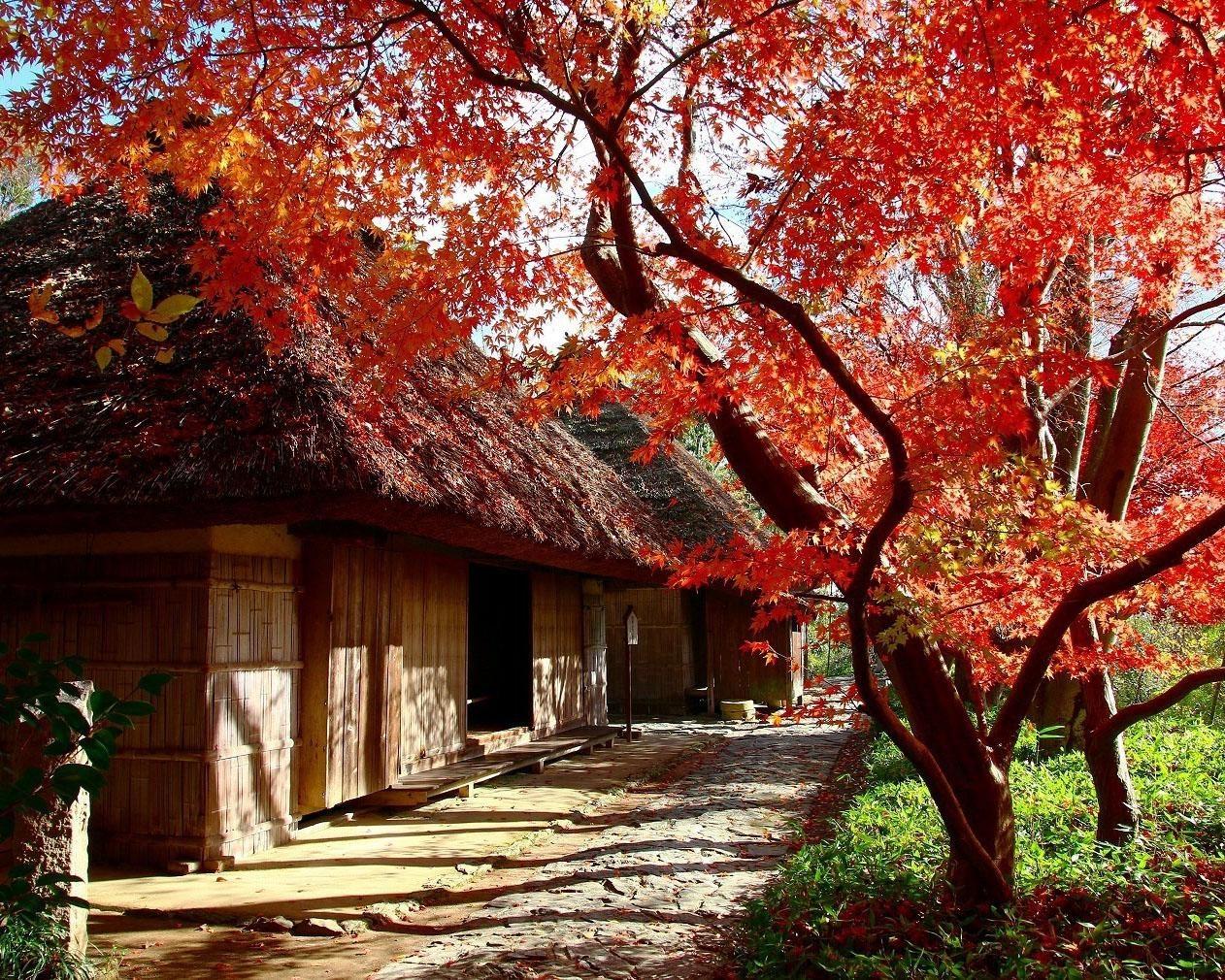 紅葉に囲まれた古民家を巡る、高松市の四国村で紅葉が見頃