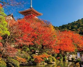 密を避けて楽しむ京都・東山の紅葉!おばんざいやあんこスイーツも