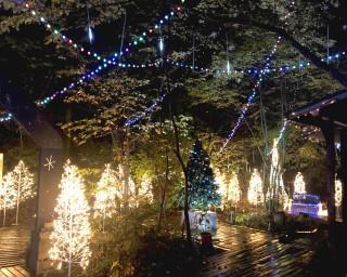 キャンプ場でイルミ!? 栃木県那珂川町で「サンタヒルズのクリスマスイルミネーション」が開催中