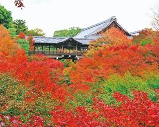 密を避けて楽しむ京都・東福寺の紅葉!ボリューム満点のスイーツにサバ寿司も