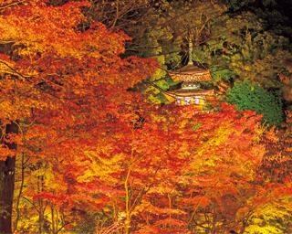 密を避けて楽しむ京都・永観堂の紅葉!湯豆腐会席や優美な庭園を堪能