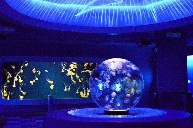 球型水槽の中でクラゲたちがふわふわと浮遊する姿に癒やされよう
