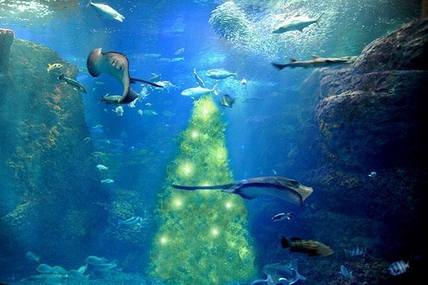 魚たちが集まる高さ4メートルの海藻ツリー「光の宿る木」は必見!