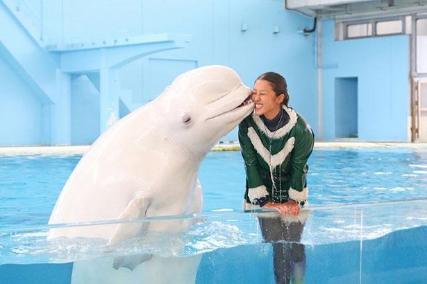 「海の動物たちのショー ~SMILE~ クリスマスver.」ではシロイルカも大活躍