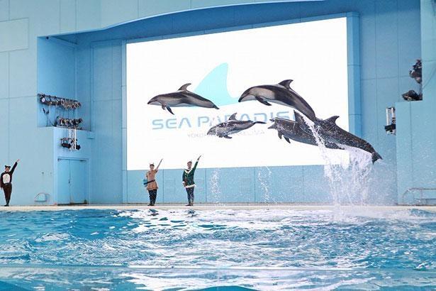 動物たちが見せる息の合ったジャンプはショーのだいご味!