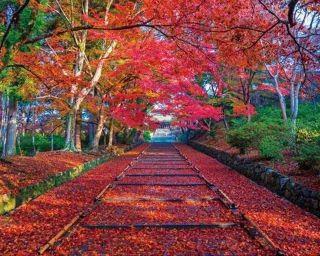 密を避けて楽しむ京都・山科の紅葉!マールブランシュの新店や無印良品の大型店も