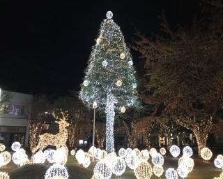 写真映えするイルミネーション、青森県三沢市で「みさわクリスマスフェスティバル2020」が開催中