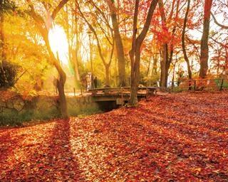 京都府立植物園で楽しむ紅葉散策!ライトアップがバージョンアップして開催