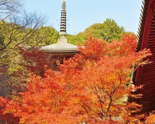 京都・高雄で楽しむ紅葉散策!錦繍の山をゆっくりハイキング