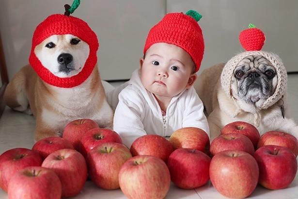 リンゴがいっぱい