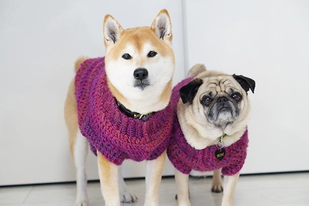 紫がよく似合う