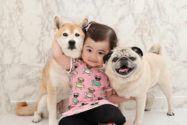 きょうだいのように仲良しな、柴犬のトラくんとパグのポムくん、そしてエマちゃん