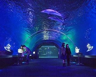 水族館「ドルフィン ファンタジー」にて幻想的な空間に広がるイルカたち