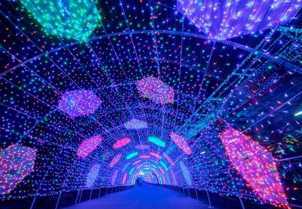 照明デザイナー石井幹子が手掛ける650万球のイルミネーションは圧巻※画像はイメージ