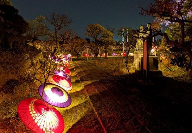 和傘を使い文化財「多宝塔」と「八祖師像」をライトアップ※画像はイメージ