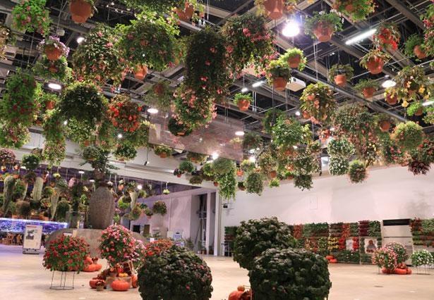 「HANA・BIYORI」には300鉢を超えるフラワーシャンデリアもお目見え!※画像はイメージ