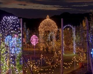 日本最大級のガーデニング庭園がライトアップ、岩手県雫石町のフラワー&ガーデン森の風で「ナイトガーデン&イルミネーション」が開催中
