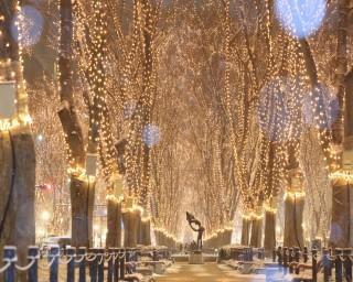 約60万球のイルミネーションがお出迎え、宮城県仙台市で「2020SENDAI光のページェント」が開催中