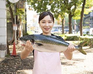 美女YouTuber「魚屋の森さん」が教える!【大きな魚のさばき方もチェック】「ブリ大根 レシピ」