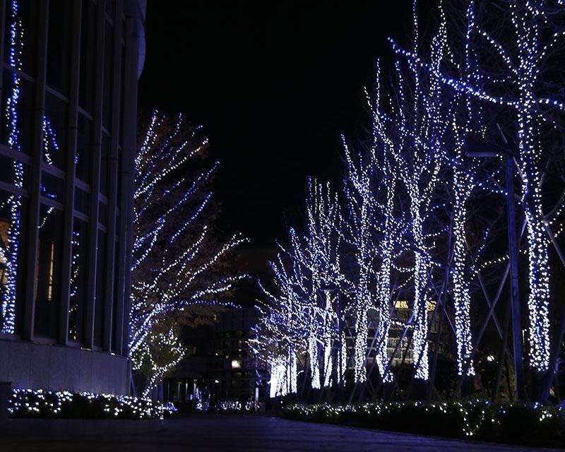 2つのキャンパスが光に包まれる、徳島文理大学の徳島キャンパスと香川キャンパスで「イルミネーション2020」開催