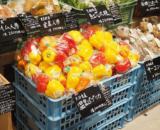 温泉の熱で栽培された温泉パプリカも人気商品