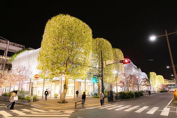本館前。街路樹を包むように施されたシャンパンゴールドのイルミが輝く