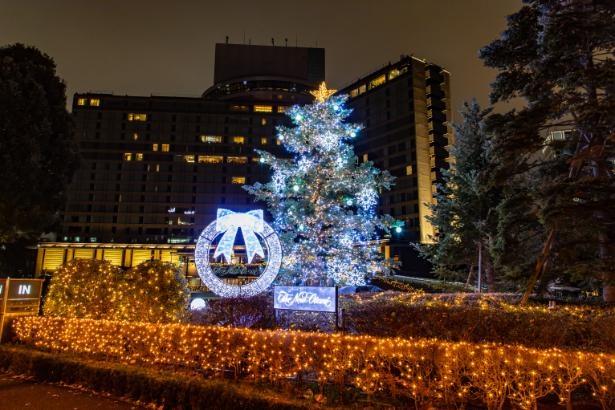 自生するもみの木が輝くツリーに変身する正面玄関と、外周のイルミネーション。ツリーは12月25日(金)まで