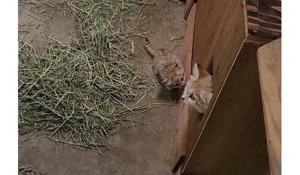 生後32日目、頻繁に巣箱の外へ出る様子が見られるように