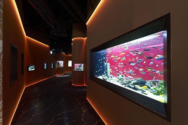 「アフリカゾーン」は、アフリカの大地をイメージしたオレンジと赤がキーカラー