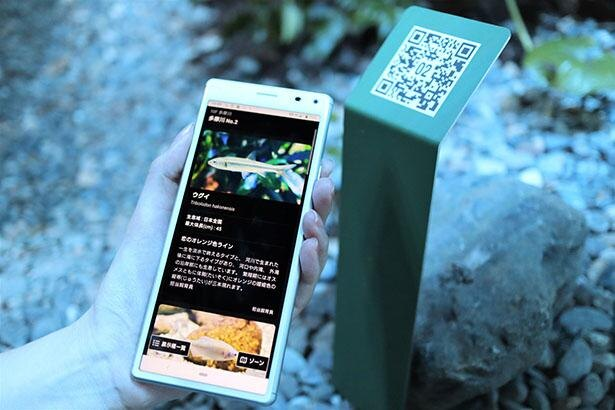 スマートフォンなどで読み込むと、展示されている生きものの名前や特徴が表示される「QR魚名板」
