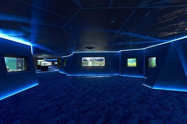 アロワナの仲間や、世界最大級のメコンオオナマズなどを展示する「オセアニア・アジアゾーン」
