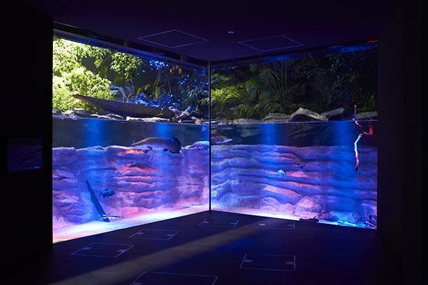 夜の「アマゾンゾーン」ピラルク水槽