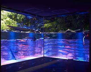 最新テクノロジーを駆使した展示で話題!駅前ビルに誕生した新感覚アクアリウム「カワスイ 川崎水族館」