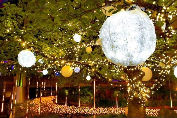 木に飾られたオーナメントが幻想的に輝く「知識の木」